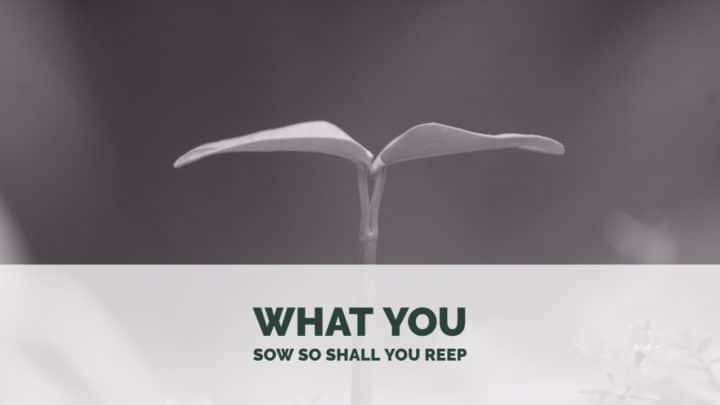 What You Sow So Shall You Reep